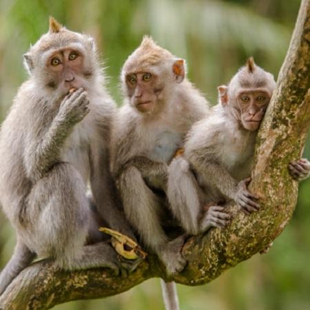 Ada Monyet Jadi-jadian di Sanhok! Shroud 'Bunuh' Satu